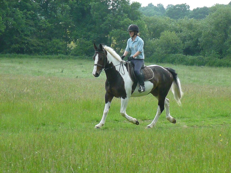 Riding School Riding Farm Equestrian Centre